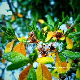 colorful flower nature snow sanchizephotography