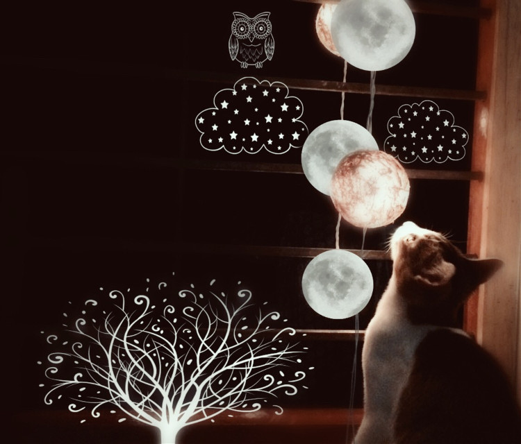 #FreeToEdit #remix #cat #dream #photography #animals #interesting #moon #picsart #tree  PC @belladona4 The dreamy cat....