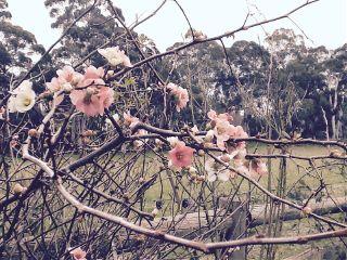 myphoto 2014 cherryblossom sakura interesting