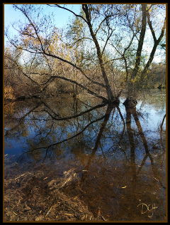myphotography marsh nature fxeffect