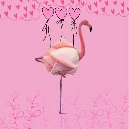 freetoedit cute florida flamingo pink