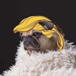 Get,Trumped.
