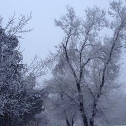 freetoedit trees winter snow nature