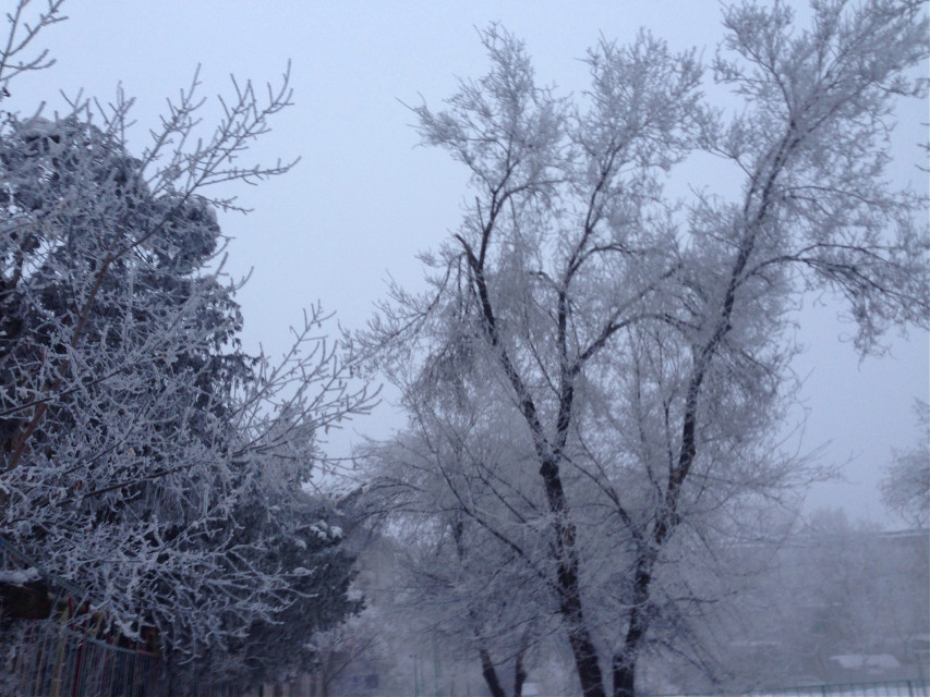#freetoedit #trees #winter #snow #nature #photography #interesting #art