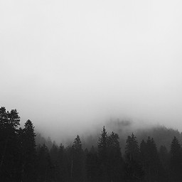 freetoedit forest mountains mountainview fog
