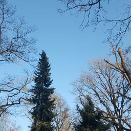 photography bavaria woods bluesky freetoedit