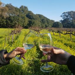 dpccheers wine winetasting napavalley winecountry