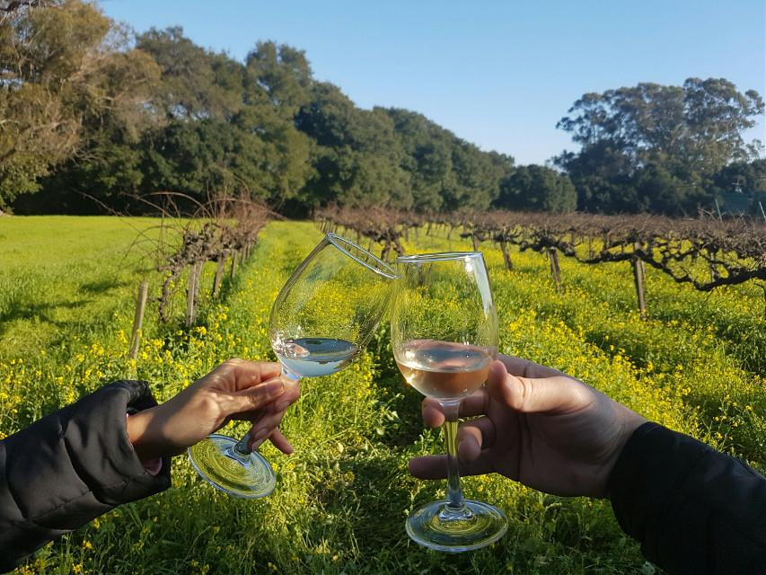 #dpccheers #wine #winetasting #napavalley #winecountry #vineyard