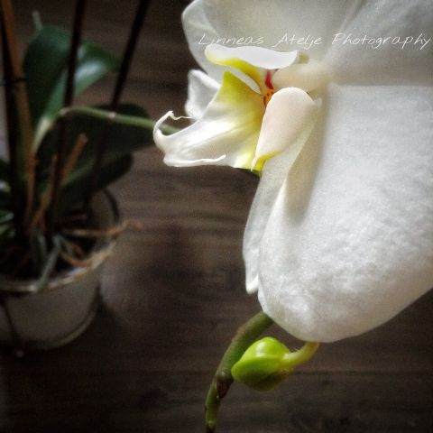 interesting photography nature flowers white