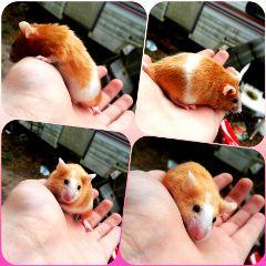 mouse petsandanimals petmouse photography photo freetoedit