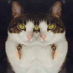 freetoedit cat myphotography mycat mirroreffect