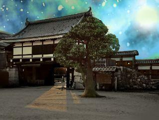 photography freetoedit tree japan