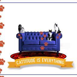 freetoedit catstickers madewithpicsart catonthesofaremix