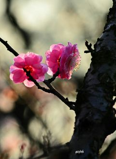 nature#flowers#photography spring# nature flowers photography