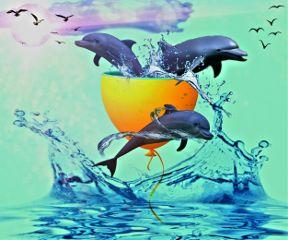 freetoedit dailyremix dolpins water splitballoonremix