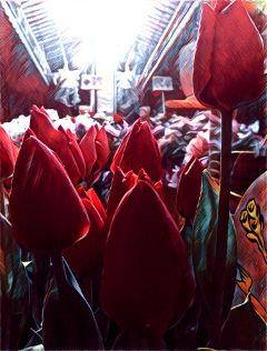 flowers flowerful photography tulips photoart