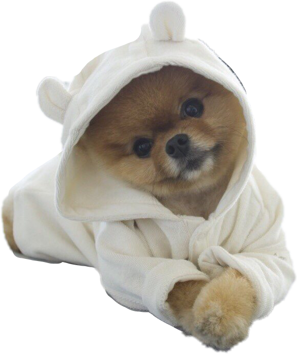 #собака #шпиц #мимими #dog #spiz#FreeToEdit
