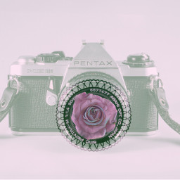 freetoedit rose photography camera pentax