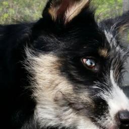 dog husky mypet nationalpetday petsandanimals dpcanimaleyes dpcdogs