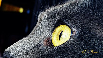 dpcanimaleyes eyes petsandanimals photography cat